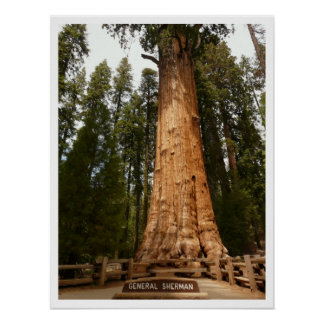 General Sherman Sequoia, Sequoia National Park Poster