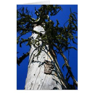 General Sherman Tree Card