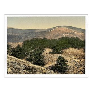 General view of the cedars of Lebanon Lebanon Ho Post Card