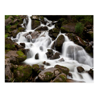 Gentle Cascades Over Moss Covered Stones Postcard