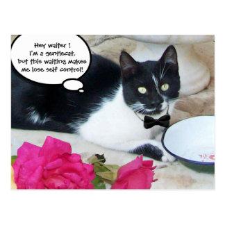 GENTLE CAT IN THE RESTAURANT Happy Birthday Postcards