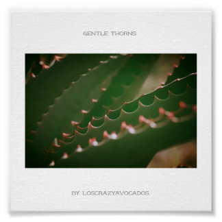 Gentle Thorns Green Succulent Plant Aloe Poster