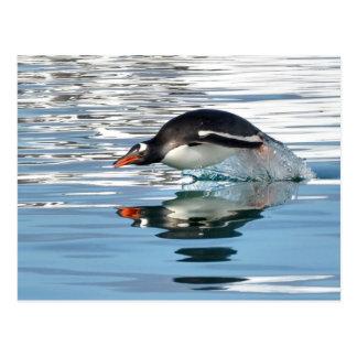 Gentoo Penguin Diving Postcard