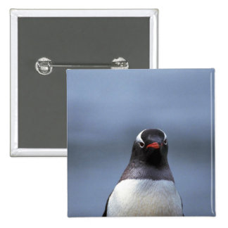 Gentoo Penguin Head Shot Pinback Buttons