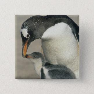 Gentoo Penguin, (Pygoscelis papua), adult 15 Cm Square Badge