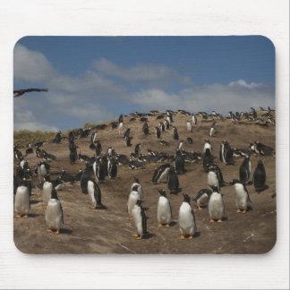 Gentoo Penguin (Pygoscelis papua) colony on West Mousepads