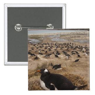 Gentoo Penguin (Pygoscelis papua) colony, West 2 15 Cm Square Badge