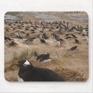 Gentoo Penguin (Pygoscelis papua) colony, West 2 Mousepads