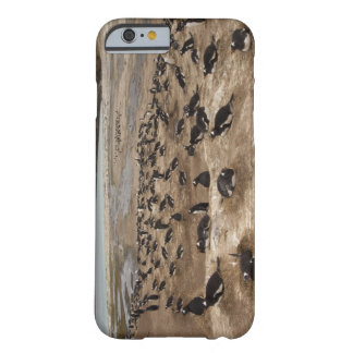 Gentoo Penguin (Pygoscelis papua) colony, West Barely There iPhone 6 Case