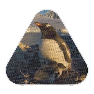 gentoo penguin, Pygoscelis Papua, parent with Speaker
