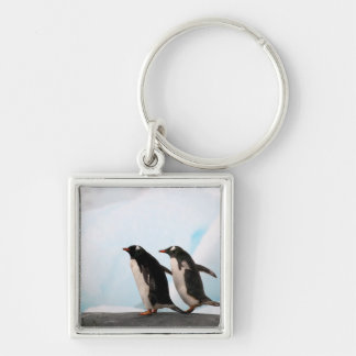 Gentoo penguins on rocky shoreline with backdrop 2 Silver-Colored square key ring