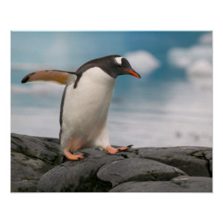 Gentoo penguins on rocky shoreline with backdrop 3 poster