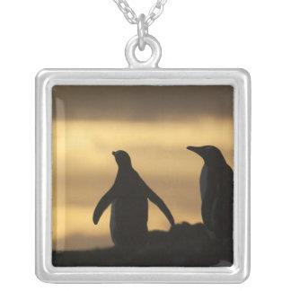 Gentoo Penguins Pygoscelis papua) at sunset Square Pendant Necklace