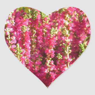 Genus Erica pink Heart Sticker