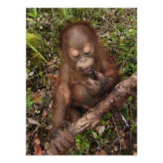 George Orangutan Dirty Mouth Print