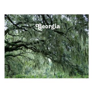 Georgia Trees Postcard