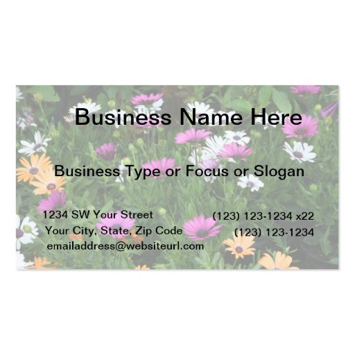gerber daisies field multi colored flower business card