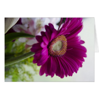 Gerber Daisy Collection Greeting Card
