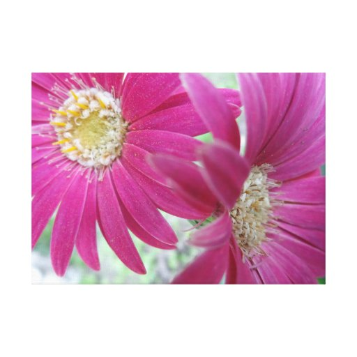 Gerber Daisy Wall Panel Stretched Canvas Prints