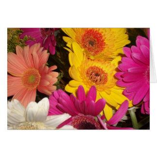 Gerbera Daisies Birthday Card Template