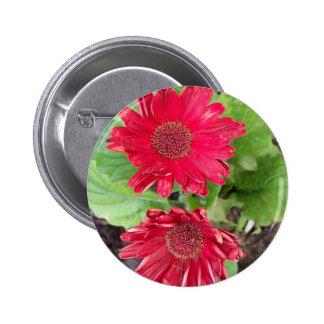 Gerbera Daisies Button