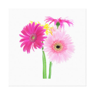 Gerbera Daisies Pink Stretched Canvas Print