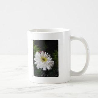 Gerbera Daisy 12 Mugs