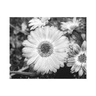 Gerbera Daisy Black & White Photograph Canvas Prints