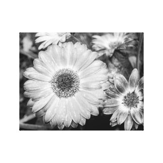 Gerbera Daisy Black & White Photograph Gallery Wrapped Canvas