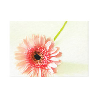 Gerbera Daisy Stretched Canvas Print