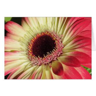 Gerbera Daisy - Close Up Card