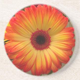 Gerbera Daisy Coaster