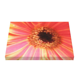 Gerbera Daisy Flower Canvas Print