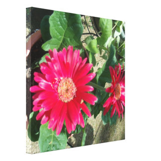 Gerbera daisy gallery wrapped canvas