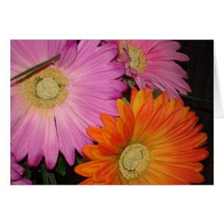Gerbera Daisy Garden Card
