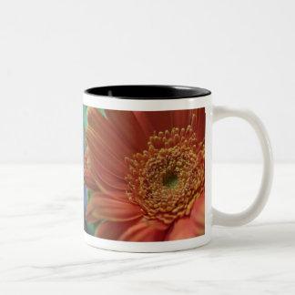 Gerbera daisy mug