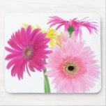 Gerbera Daisy Pink Flowers