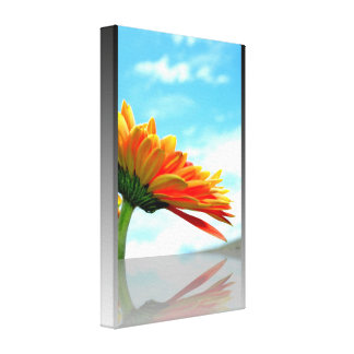 Gerbera Daisy Reflection Gallery Wrapped Canvas