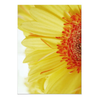 Gerbera Daisy yellow Flower Card