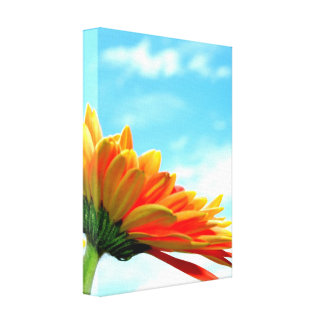 Gerbera Flower and Sky Gallery Wrapped Canvas
