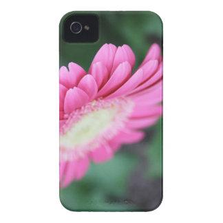 gerbera flower blackberry case