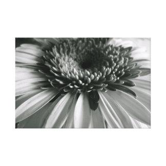 Gerbera flower canvas prints
