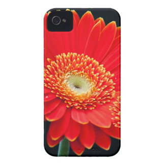 gerbera iPhone 4 case