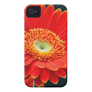 gerbera iPhone 4 covers