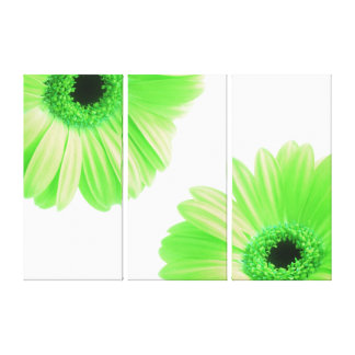 Gerbera Twins Green Canvas Print