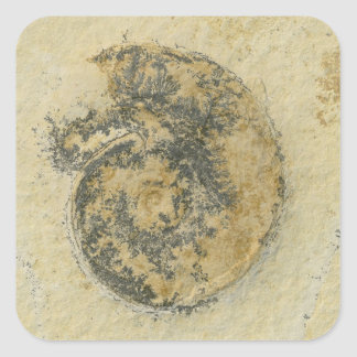 German Ammonite with Dendrites Square Sticker