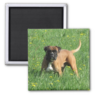German boxer square magnet