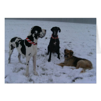 German Dogge, great dane, Hunde, Weihnachten Card