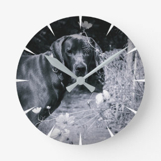 German Doggen photos Round Clock