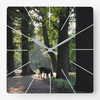 German Doggen photos Square Wall Clock